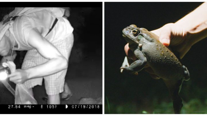 Cops Are Investigating a Hallucinogenic Desert Toad Heist