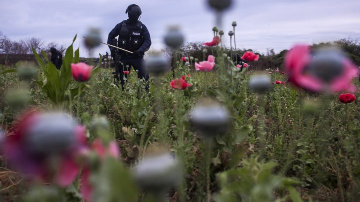 The World's War on Drugs Has Failed Yet Again
