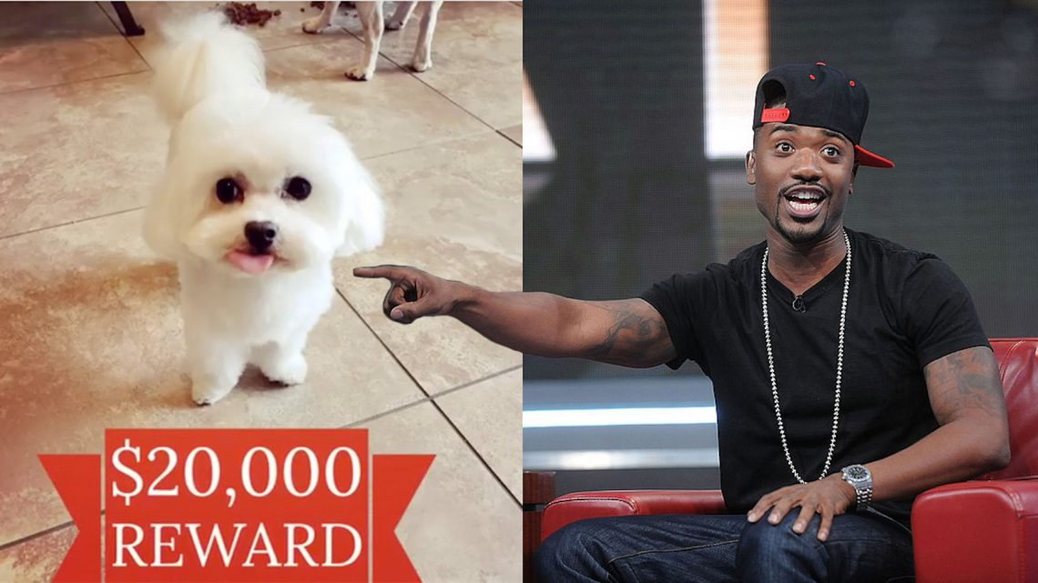 Ray J's Dog 'Boogotti' Got Kidnapped, and We Will Not Rest Until He Is Returned