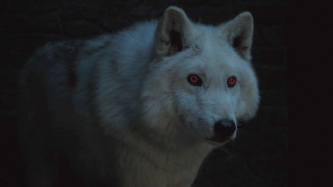 1556128617537-where-is-ghost-game-of-thrones-season-8-1555383037232_1280w