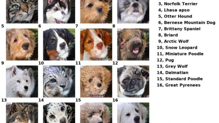 Turn Your Pet Into Another Species With This AI Tool
