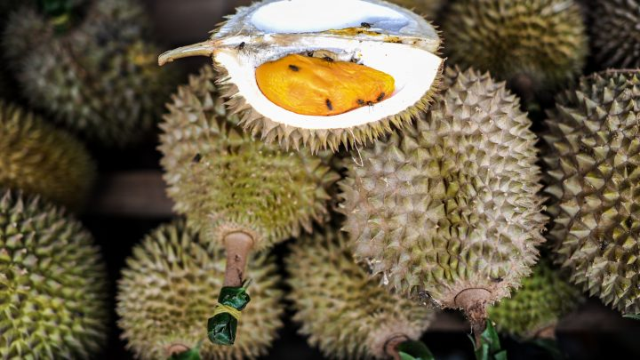 Driver Learns the Hard Way that Durian Can Make You Fail a Breathalyzer Test