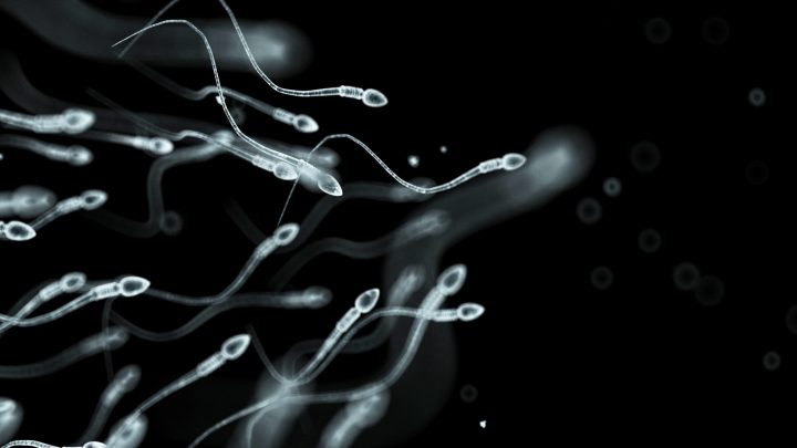 The Complex Ethics of Saving a Dead Person's Sperm