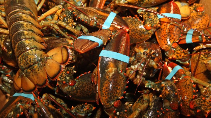 Workers Chase Man Who Stole $10K Worth of Live Lobsters in Most Boston Situation Ever