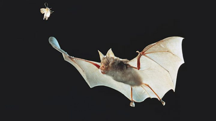 Here's How Scientists Are Tracking Coronavirus — From Bats to New Yorkers