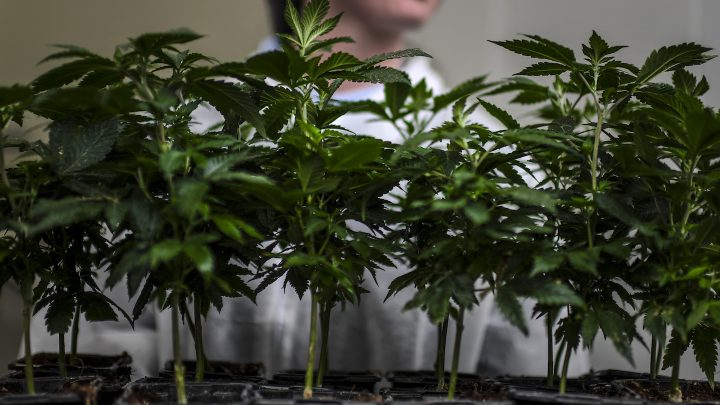 Another Australian State Loosens Weed Laws as the Country Inches Towards Decriminalization