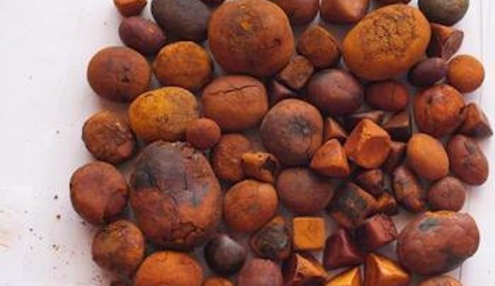 Offcut Gems: Inside the Million-Dollar Market for Cow Gallstones